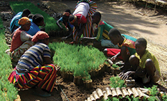Planting out of Poverty in Ethiopiaイメージ